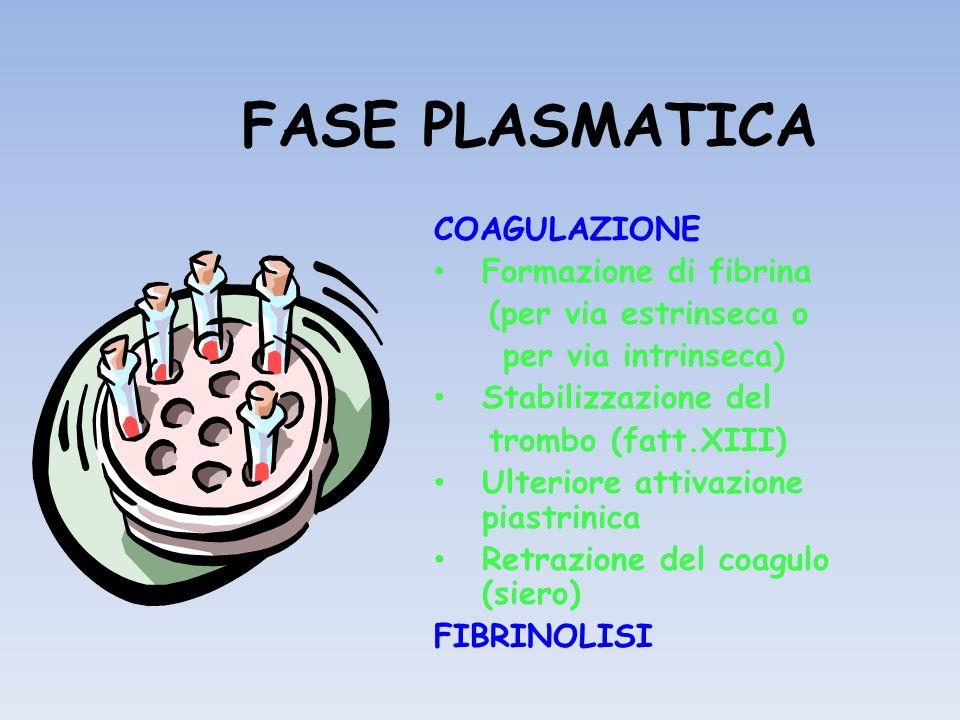 FASE PLASMATICA COAGULAZIONE Formazione di fibrina (per via estrinseca o per via intrinseca) Stabilizzazione del trombo (fatt.XIII) Ulteriore attivazi