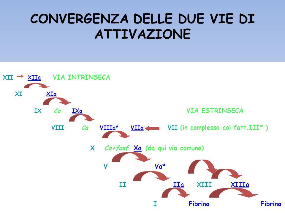 CONVERGENZA DELLE DUE VIE DI ATTIVAZIONE XII XIIa VIA INTRINSECA XI XIa IX Ca IXa VIA ESTRINSECA VIII Ca VIIIa* VIIa VII (in complesso col fatt.III* )