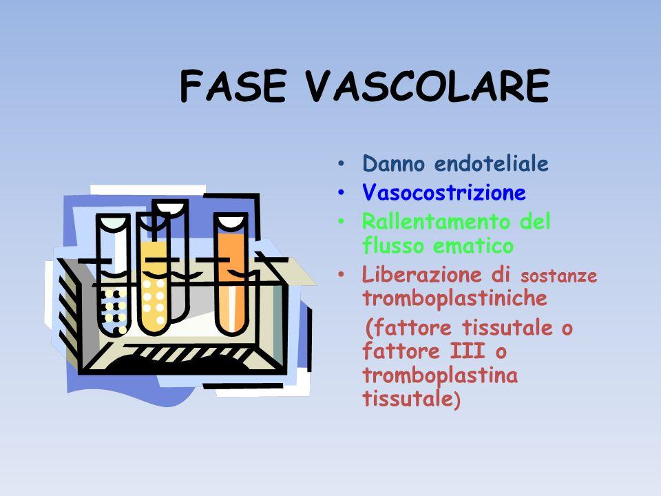 FASE VASCOLARE Danno endoteliale Vasocostrizione Rallentamento del flusso ematico Liberazione di sostanze tromboplastiniche (fattore tissutale o fatto