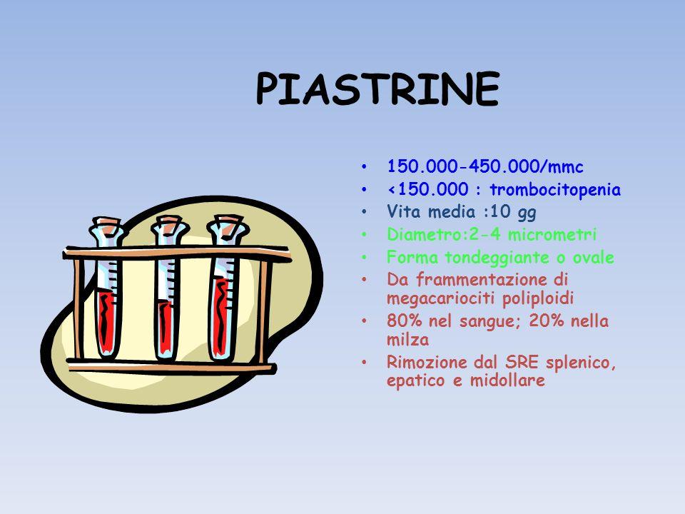 PIASTRINE Membrana profondamente invaginata (sistema canalicolare aperto o di connessione superficiale) Sistema tubulare denso (STD) Microtubuli (shape-change) Filamenti contrattili Granuli alfa (PF4, BTG, FIBR.) Granuli densi (serotonina, ADP, ATP, Ca ) Glicoproteine di membrana (recettori che mediano ladesione e laggregazione)