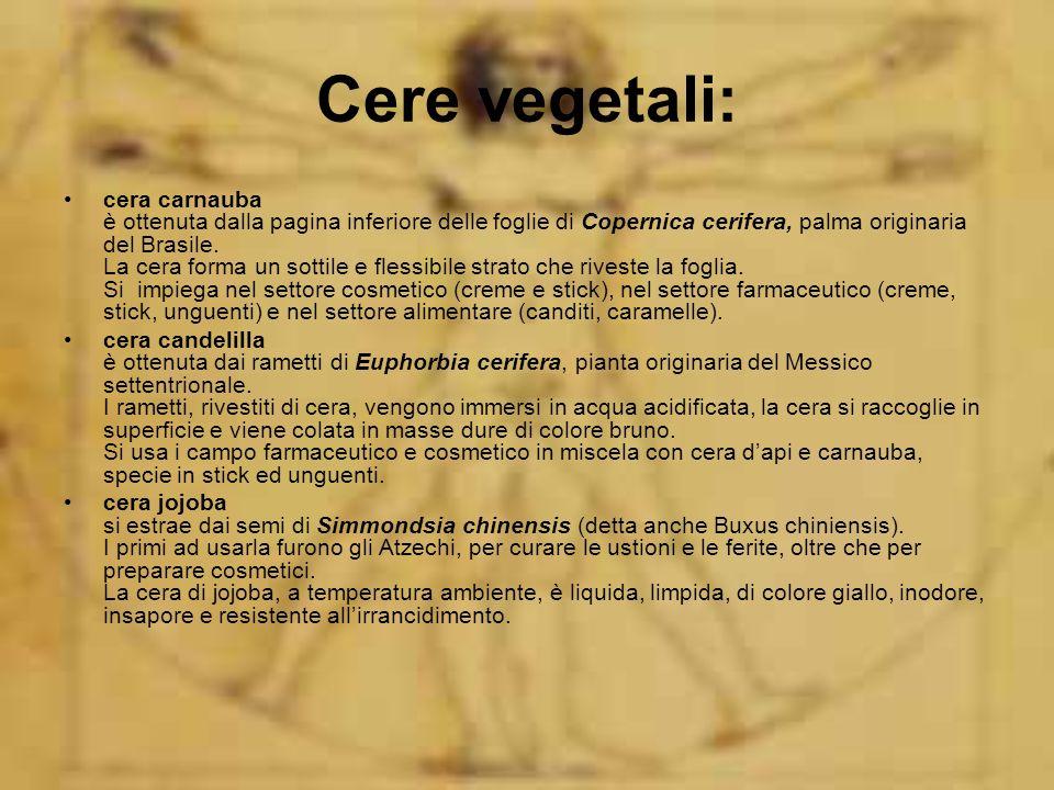 Cere vegetali: cera carnauba è ottenuta dalla pagina inferiore delle foglie di Copernica cerifera, palma originaria del Brasile. La cera forma un sott