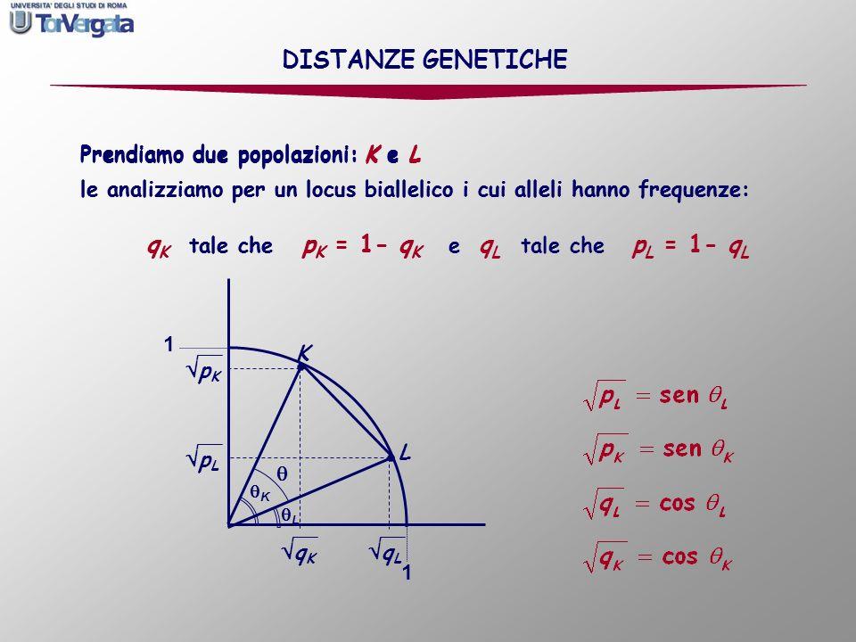 K 1 1 L Prendiamo due popolazioni: K e L K q K p K L q L p L DISTANZE GENETICHE Prendiamo due popolazioni: K e L le analizziamo per un locus biallelic