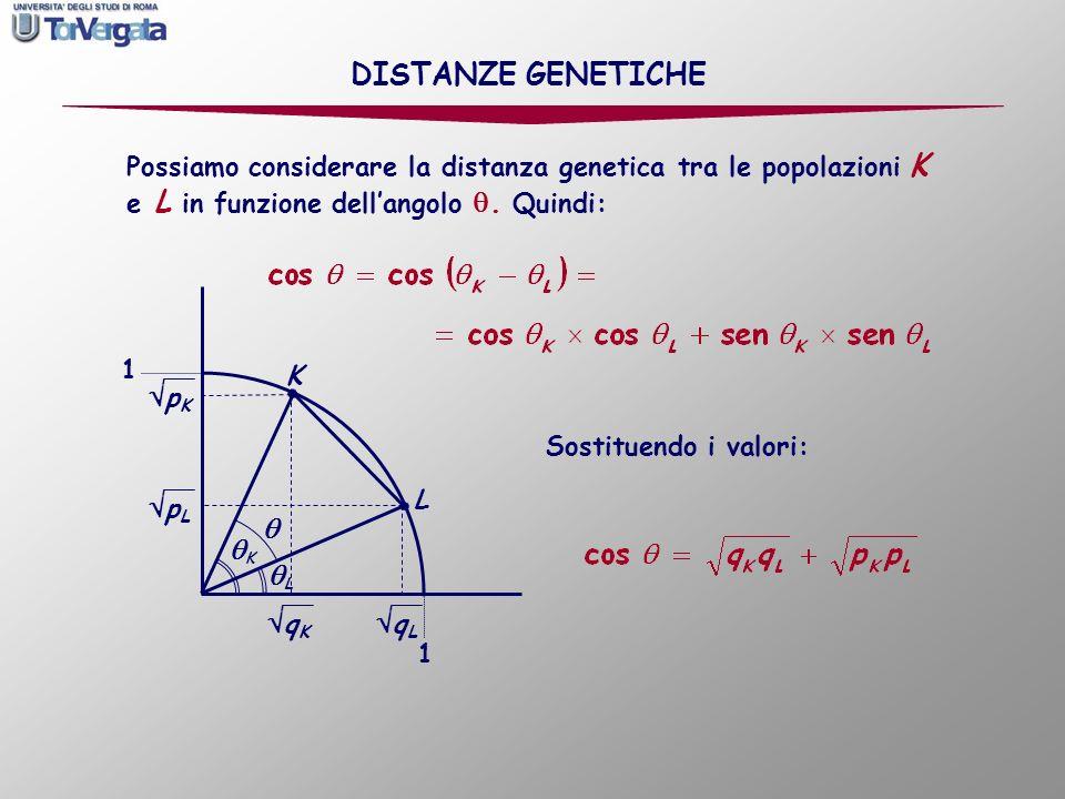 Possiamo considerare la distanza genetica tra le popolazioni K e L in funzione dellangolo. Quindi: L K q L 1 1 K L q K p K p L Sostituendo i valori: D