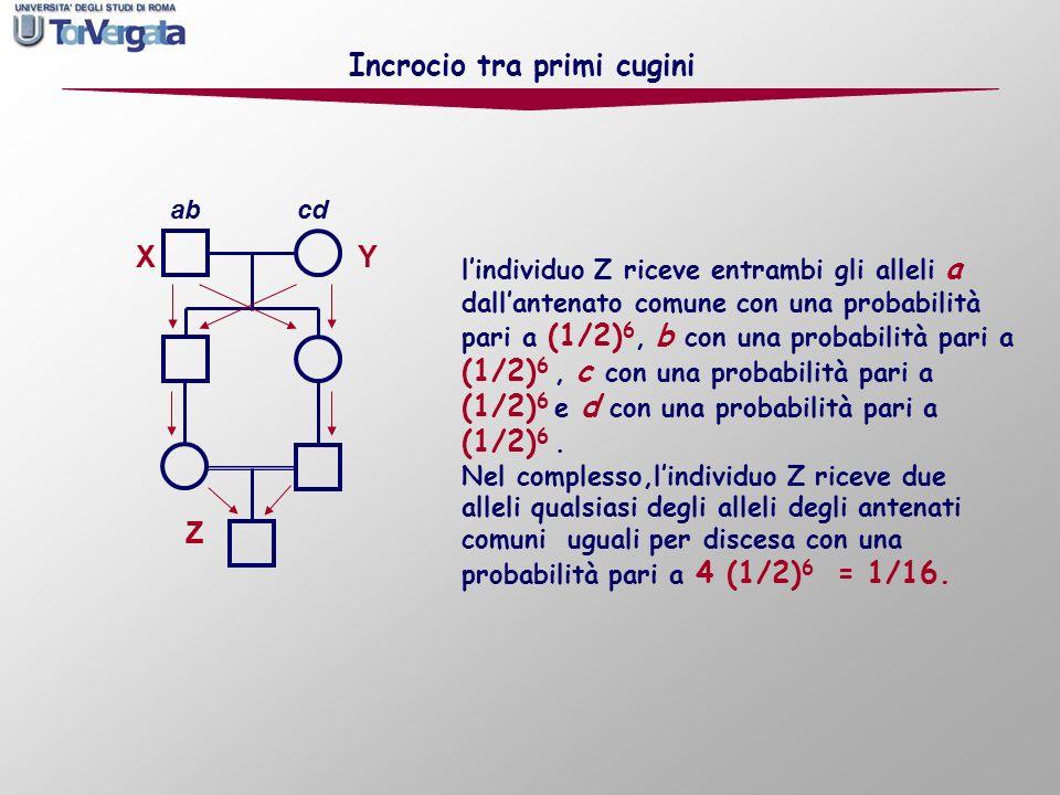 X Y Z Incrocio tra primi cugini ab cd lindividuo Z riceve entrambi gli alleli a dallantenato comune con una probabilità pari a (1/2) 6, b con una prob