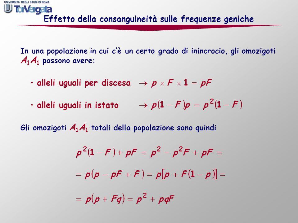 Effetto della consanguineità sulle frequenze geniche In una popolazione in cui cè un certo grado di inincrocio, gli omozigoti A 1 A 1 possono avere: a