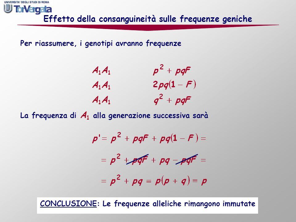La frequenza di A 1 alla generazione successiva sarà Per riassumere, i genotipi avranno frequenze Effetto della consanguineità sulle frequenze geniche