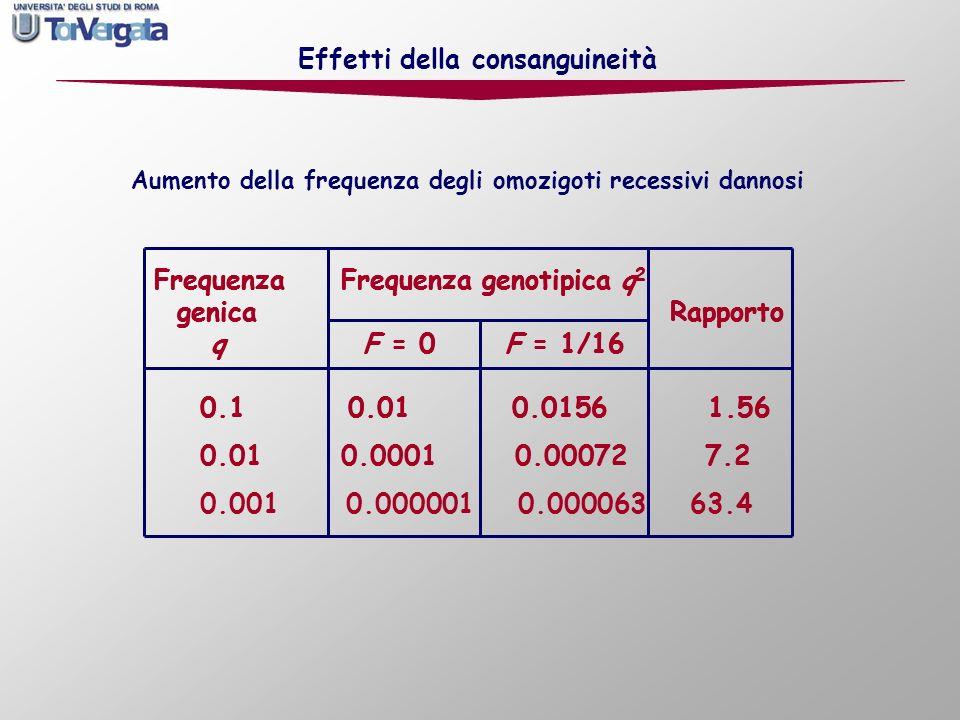 Frequenza Frequenza genotipica q 2 genica Rapporto q F = 0 F = 1/16 0.1 0.01 0.0156 1.56 0.01 0.0001 0.00072 7.2 0.001 0.000001 0.000063 63.4 Effetti