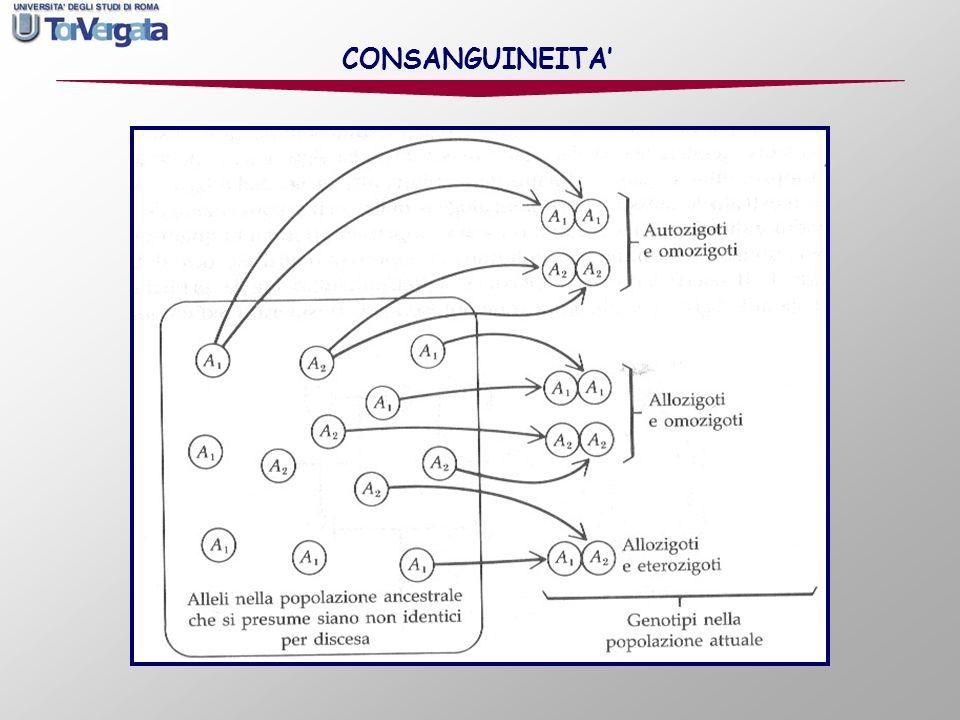 F Z = coefficiente di inincrocio dellindividuo Z (probabilità che i due geni che lindividuo possiede a un locus siano identici per discesa).