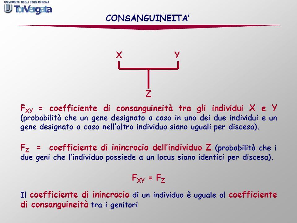 F Z = coefficiente di inincrocio dellindividuo Z (probabilità che i due geni che lindividuo possiede a un locus siano identici per discesa). F XY = co