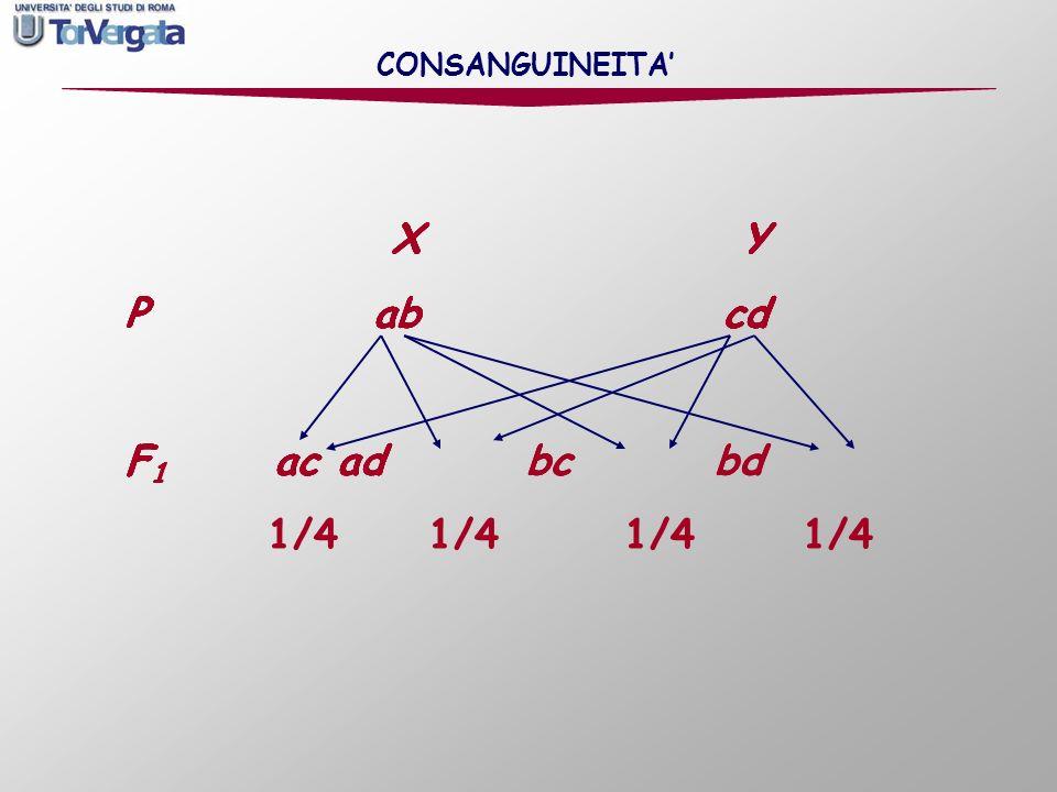X Y P ab cd X Y P ab cd F 1 ac X Y P ab cd F 1 ac ad X Y P ab cd F 1 ac ad bc X Y P ab cd F 1 ac ad bc bd X Y P ab cd F 1 ac ad bc bd 1/4 1/4 1/4 1/4