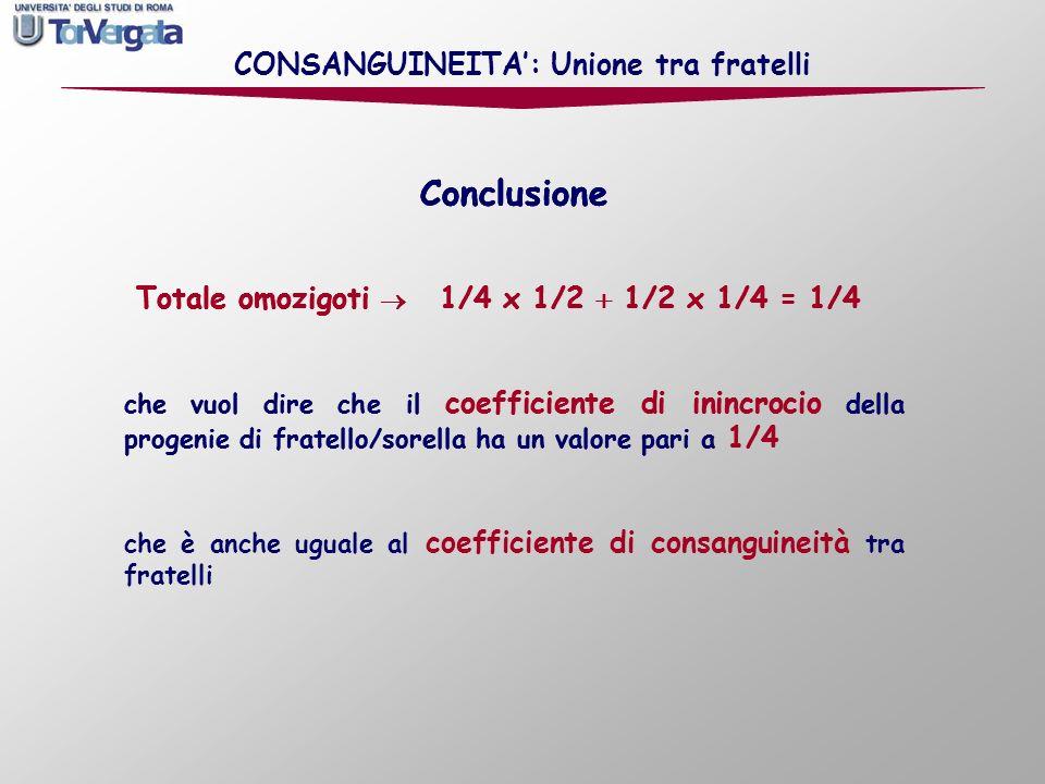 Conclusione Totale omozigoti 1/4 x 1/2 1/2 x 1/4 = 1/4 Conclusione Totale omozigoti 1/4 x 1/2 1/2 x 1/4 = 1/4 che vuol dire che il coefficiente di ini