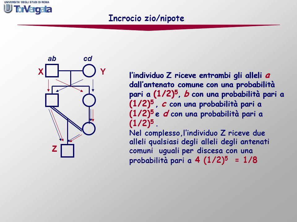 X Y Z Incrocio zio/nipote ab cd lindividuo Z riceve entrambi gli alleli a dallantenato comune con una probabilità pari a (1/2) 5 lindividuo Z riceve e