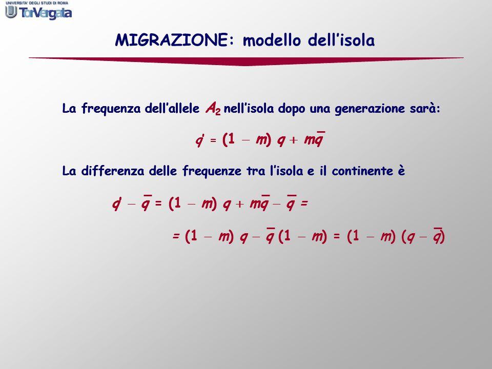 La frequenza dellallele A 2 nellisola dopo una generazione sarà: q = (1 m) q mq La frequenza dellallele A 2 nellisola dopo una generazione sarà: q = (