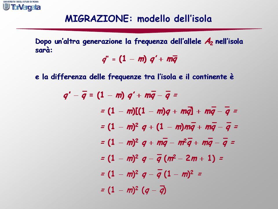 Dopo unaltra generazione la frequenza dellallele A 2 nellisola sarà: q = (1 m) q mq Dopo unaltra generazione la frequenza dellallele A 2 nellisola sar