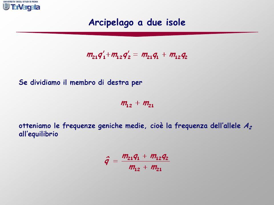Se dividiamo il membro di destra per Arcipelago a due isole otteniamo le frequenze geniche medie, cioè la frequenza dellallele A 2 allequilibrio