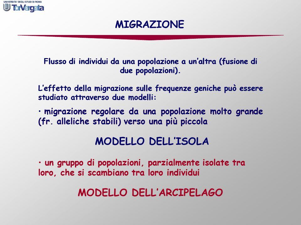 Flusso di individui da una popolazione a unaltra (fusione di due popolazioni). Leffetto della migrazione sulle frequenze geniche può essere studiato a