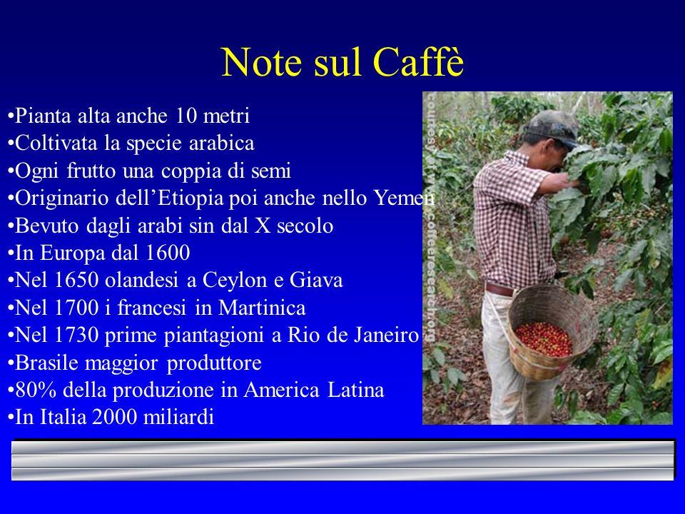 Note sul Caffè Pianta alta anche 10 metri Coltivata la specie arabica Ogni frutto una coppia di semi Originario dellEtiopia poi anche nello Yemen Bevu