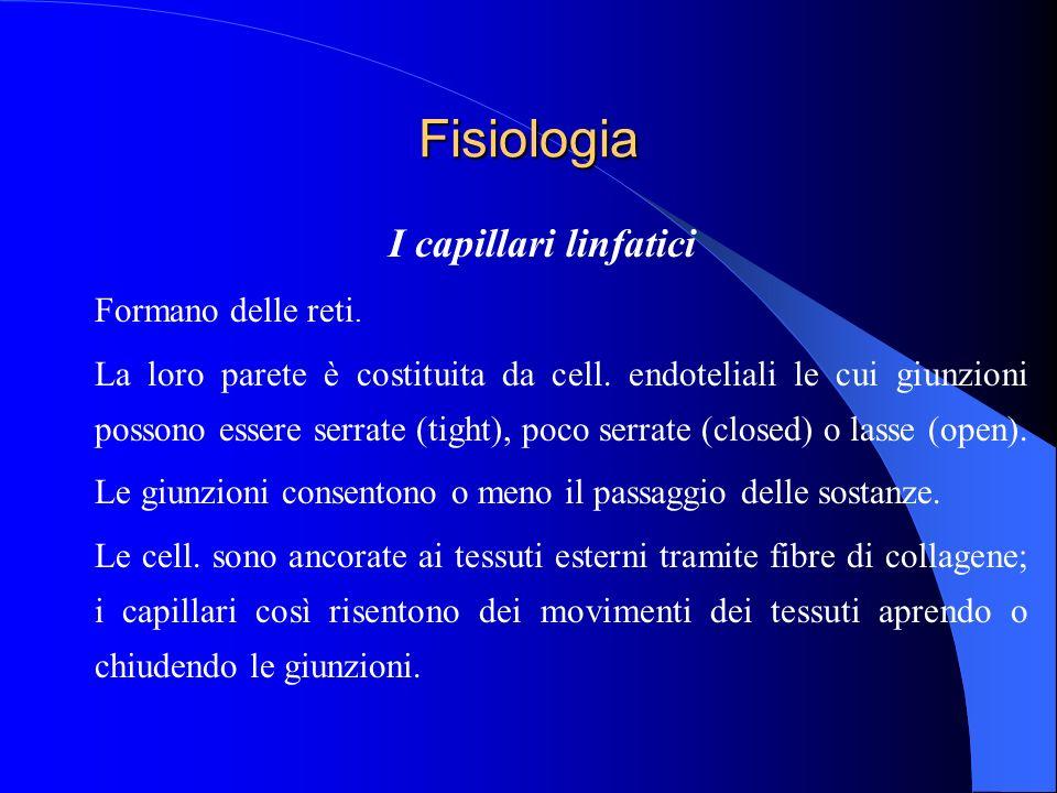 Fisiologia I capillari linfatici Formano delle reti. La loro parete è costituita da cell. endoteliali le cui giunzioni possono essere serrate (tight),