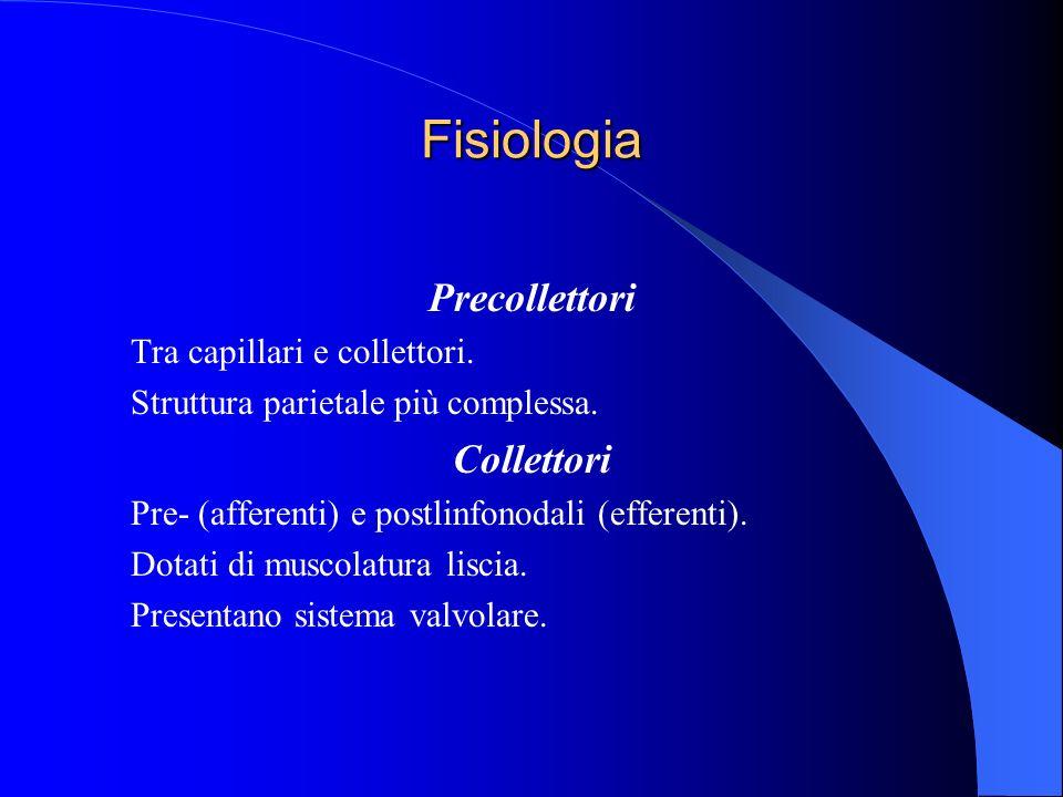 Fisiologia Precollettori Tra capillari e collettori. Struttura parietale più complessa. Collettori Pre- (afferenti) e postlinfonodali (efferenti). Dot