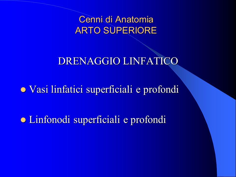 Cenni di Anatomia ARTO SUPERIORE DRENAGGIO LINFATICO Vasi linfatici superficiali e profondi Vasi linfatici superficiali e profondi Linfonodi superfici