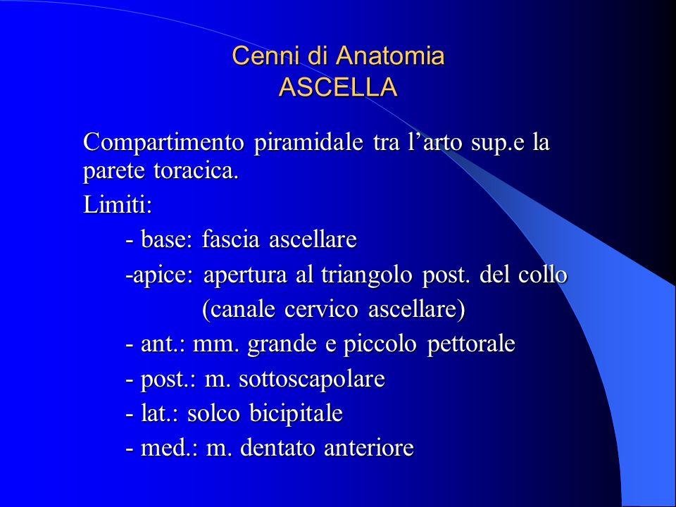 Cenni di Anatomia ASCELLA Compartimento piramidale tra larto sup.e la parete toracica. Limiti: - base: fascia ascellare -apice: apertura al triangolo