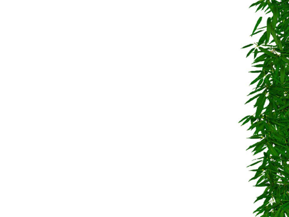 RIDURRE LA PRODUZIONE DEI RIFIUTI ALLA FONTE AZIONI DI RIDUZIONE DELLA PRODUZIONE DEI RIFIUTI AZIONE prevenzione prevenzione MOTIVI tonn.min anno tonn.max anno Riduzione pubblicità gratuita 400 600 abbattimento 50- 70% Riduzione carta uffici 300 600 abbattimento 10-20% Ingombranti riuso 300 600 rifiuto pro cap 1.5-3Kg Pannolini riutilizzabili 200 400 risparmio 5-10% TOTALE 3.200 5.600