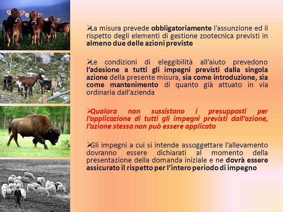 La misura prevede obbligatoriamente lassunzione ed il rispetto degli elementi di gestione zootecnica previsti in almeno due delle azioni previste Le c