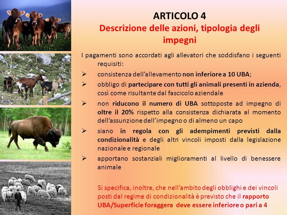 I pagamenti sono accordati agli allevatori che soddisfano i seguenti requisiti: consistenza dellallevamento non inferiore a 10 UBA; obbligo di parteci