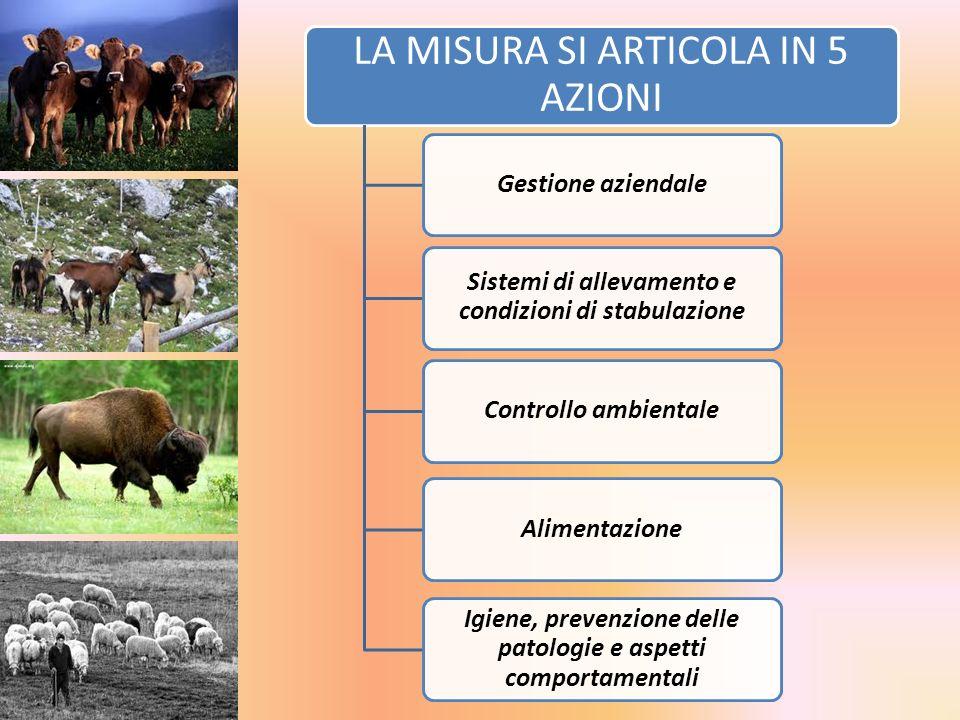 LA MISURA SI ARTICOLA IN 5 AZIONI Gestione aziendale Sistemi di allevamento e condizioni di stabulazione Controllo ambientaleAlimentazione Igiene, pre