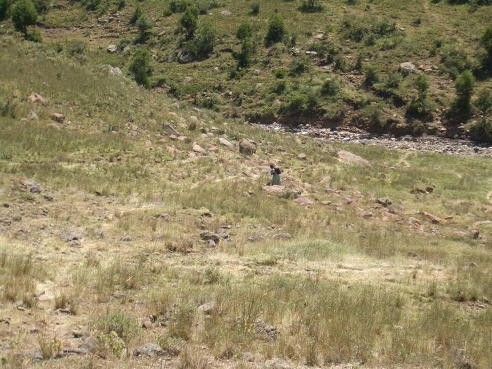 Gli altopiani dellEtiopia sono ricchi di corsi dacqua,...