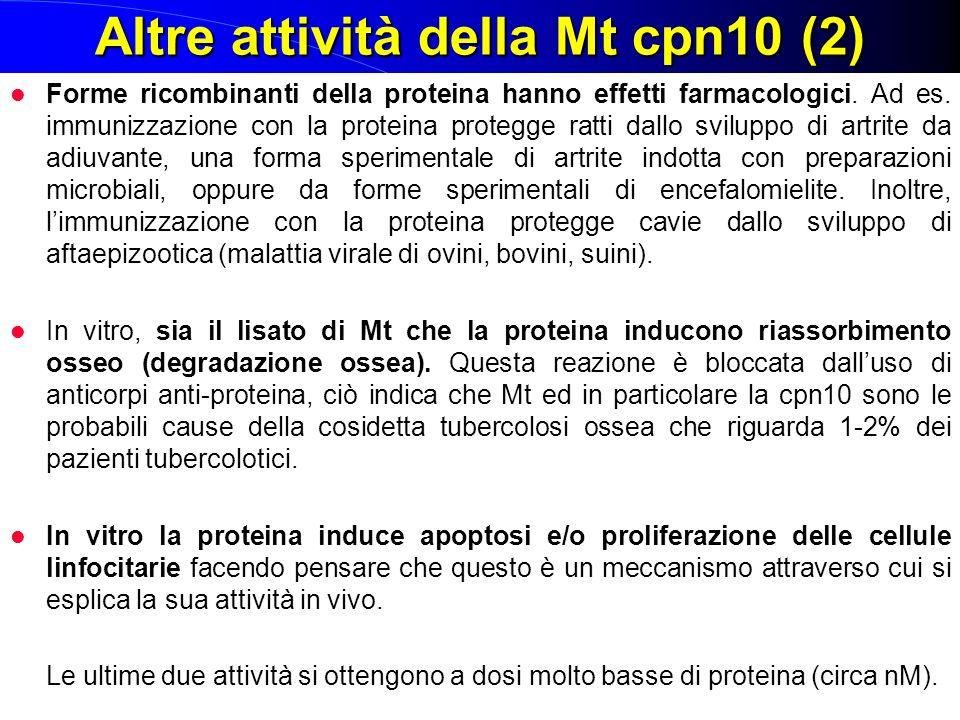 Altre attività della Mt cpn10 (2) Forme ricombinanti della proteina hanno effetti farmacologici. Ad es. immunizzazione con la proteina protegge ratti