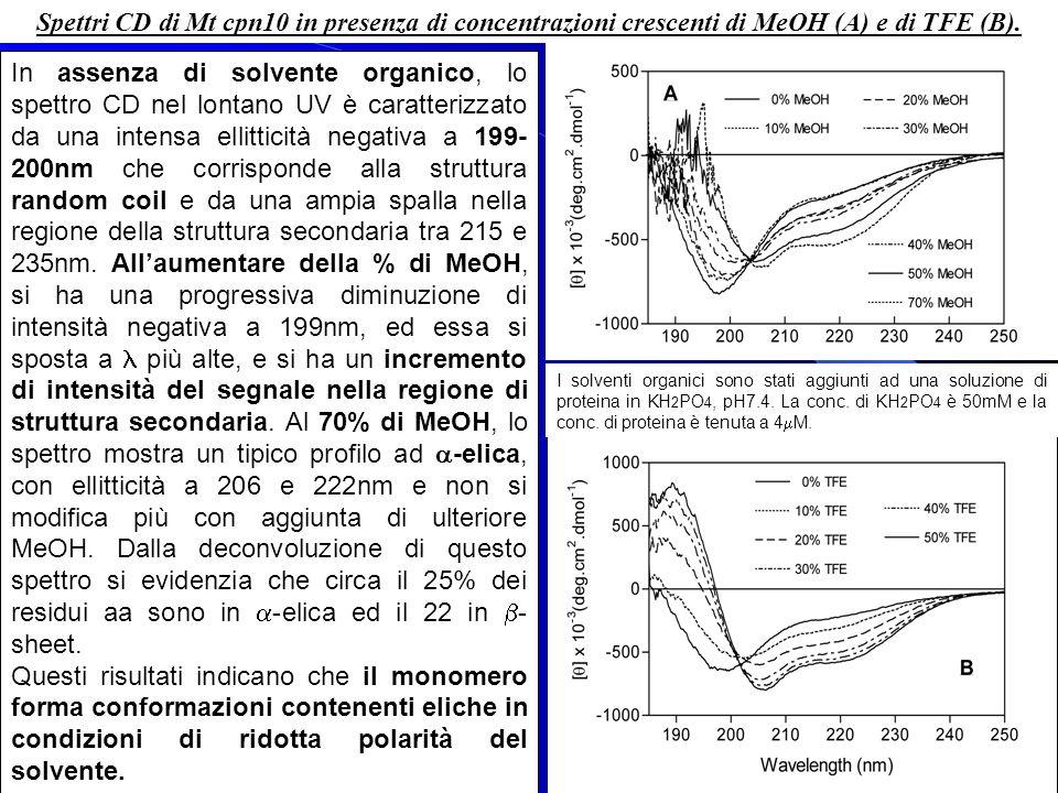 Spettri CD di Mt cpn10 in presenza di concentrazioni crescenti di MeOH (A) e di TFE (B). In assenza di solvente organico, lo spettro CD nel lontano UV