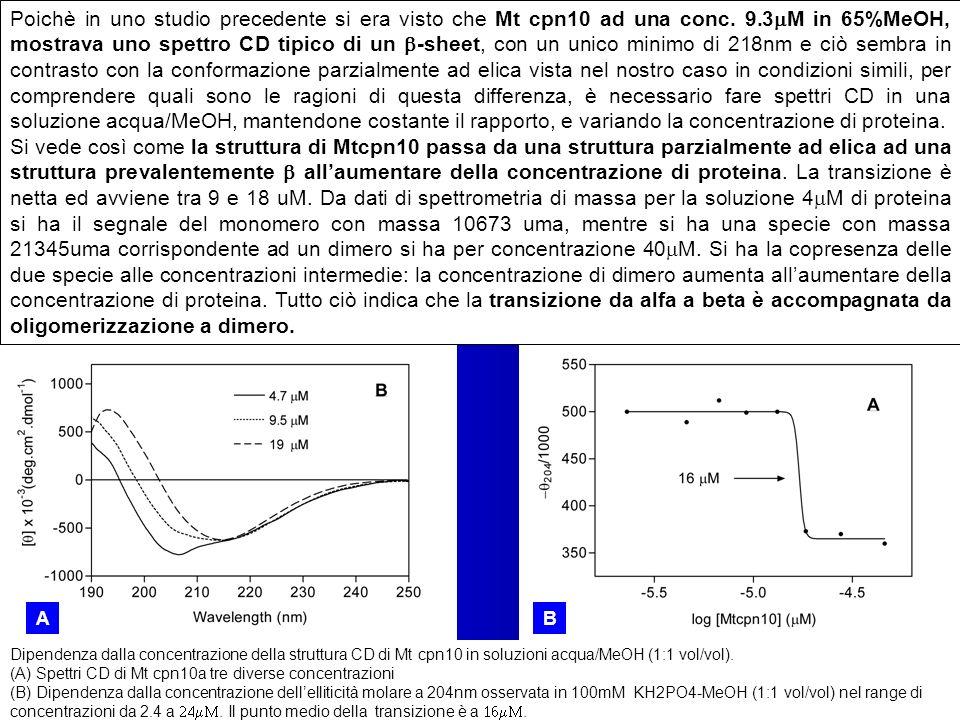 Dipendenza dalla concentrazione della struttura CD di Mt cpn10 in soluzioni acqua/MeOH (1:1 vol/vol). (A) Spettri CD di Mt cpn10a tre diverse concentr