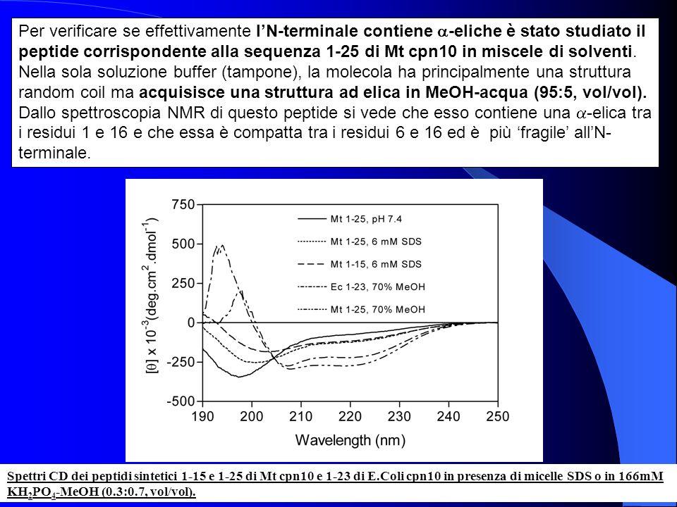 Spettri CD dei peptidi sintetici 1-15 e 1-25 di Mt cpn10 e 1-23 di E.Coli cpn10 in presenza di micelle SDS o in 166mM KH 2 PO 4 -MeOH (0.3:0.7, vol/vo