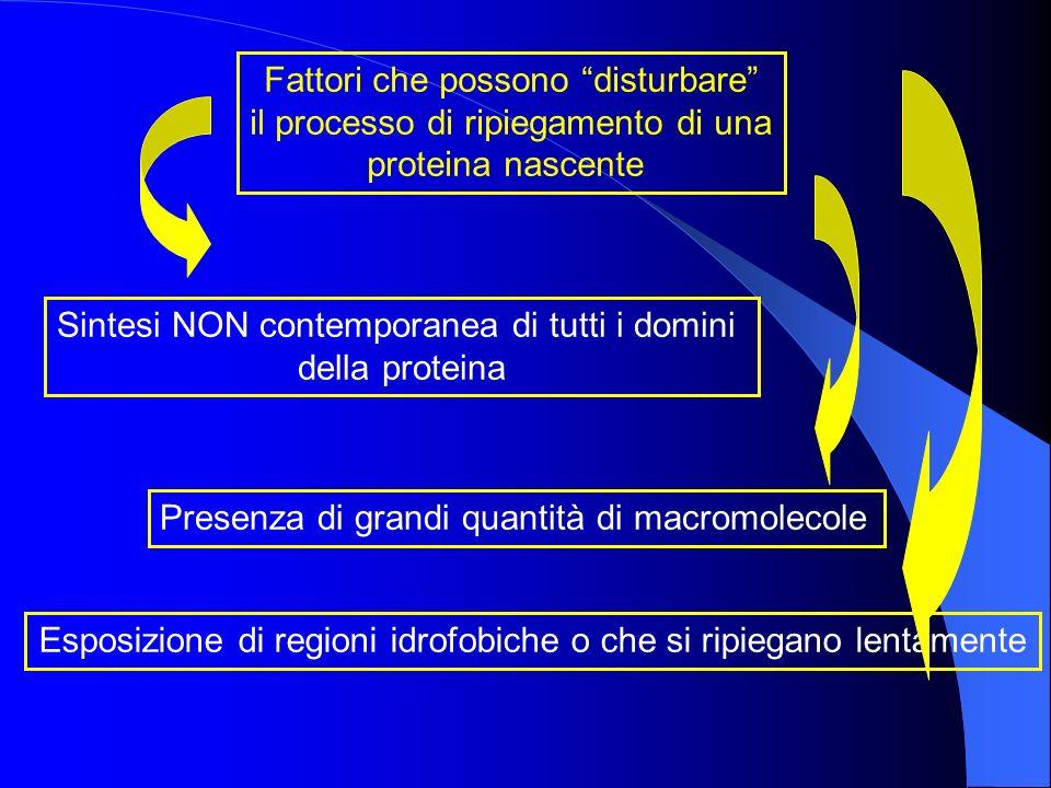Fattori che possono disturbare il processo di ripiegamento di una proteina nascente Presenza di grandi quantità di macromolecole Esposizione di region