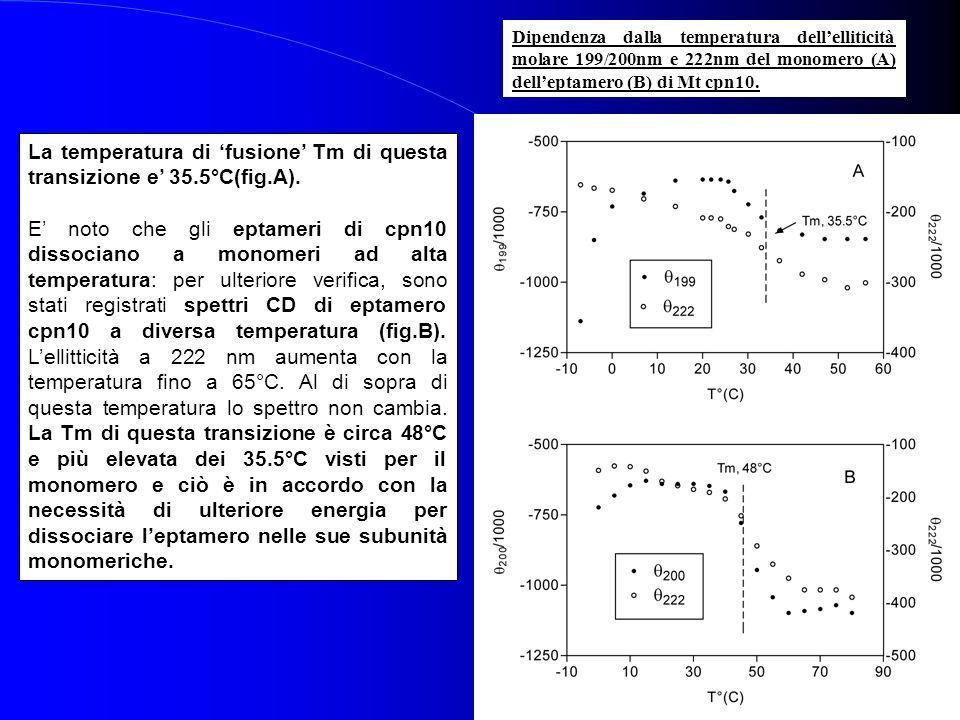 Dipendenza dalla temperatura dellelliticità molare 199/200nm e 222nm del monomero (A) delleptamero (B) di Mt cpn10. La temperatura di fusione Tm di qu