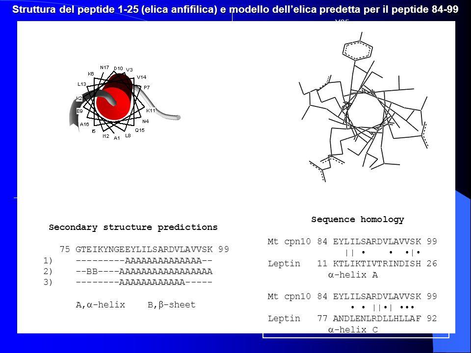 Struttura del peptide 1-25 (elica anfifilica) e modello dellelica predetta per il peptide 84-99 Secondary structure predictions 75 GTEIKYNGEEYLILSARDV