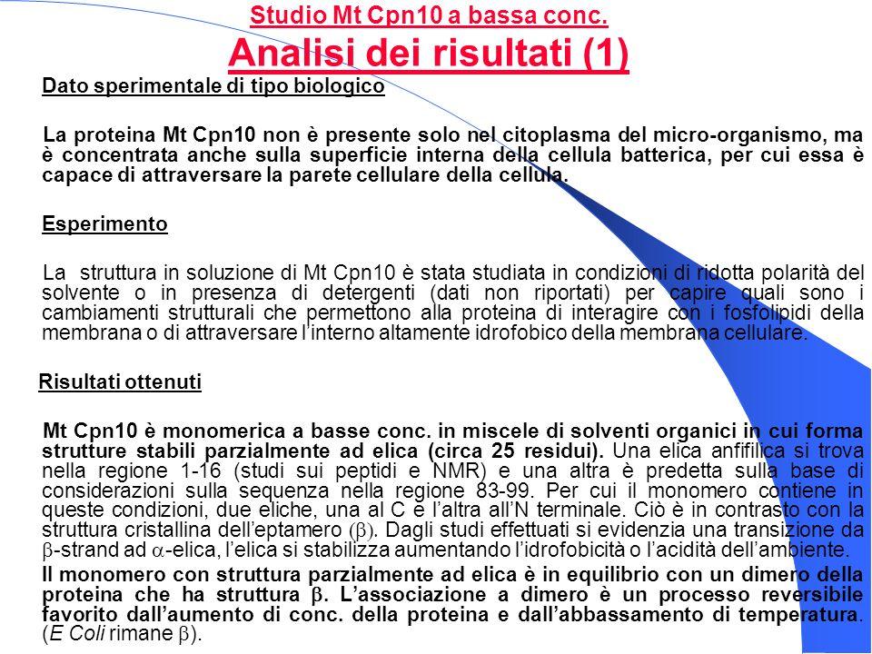 Studio Mt Cpn10 a bassa conc. Analisi dei risultati (1) Dato sperimentale di tipo biologico La proteina Mt Cpn10 non è presente solo nel citoplasma de