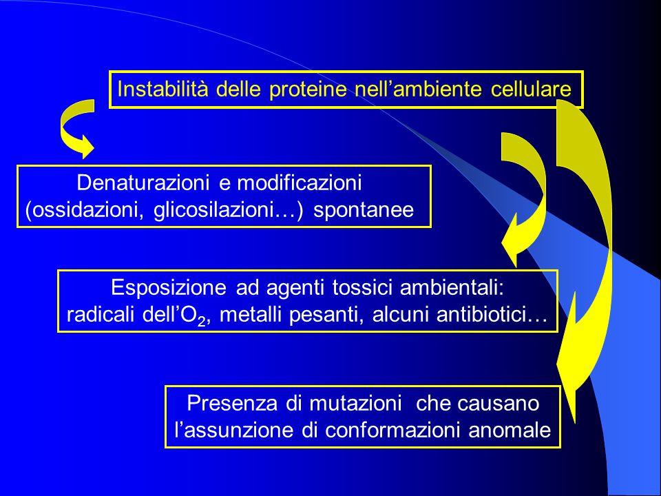 Instabilità delle proteine nellambiente cellulare Denaturazioni e modificazioni (ossidazioni, glicosilazioni…) spontanee Esposizione ad agenti tossici