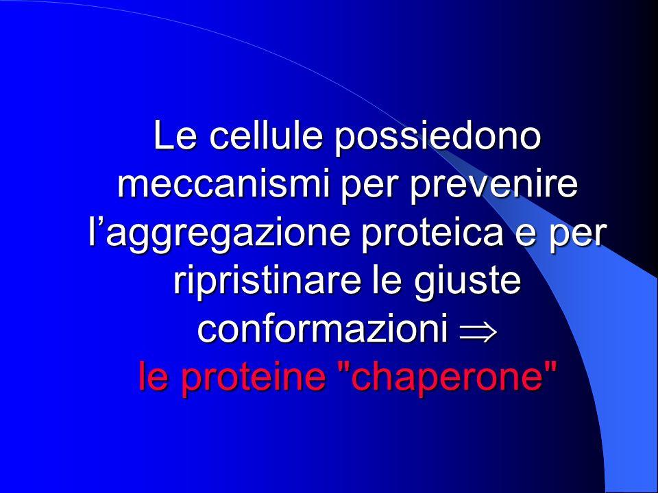 Funzioni principali delle proteine chaperone Impedire laggregazione e la precipitazione delle catene proteiche con una conformazione alterata o durante il processo di trasduzione Aiutare le catene polipeptidiche ad assumere una conformazione corretta durante la sintesi proteica o a riacquistarla dopo un evento che ne ha alterato la struttura Ruolo nella degradazione delle proteine alterate strutturalmente