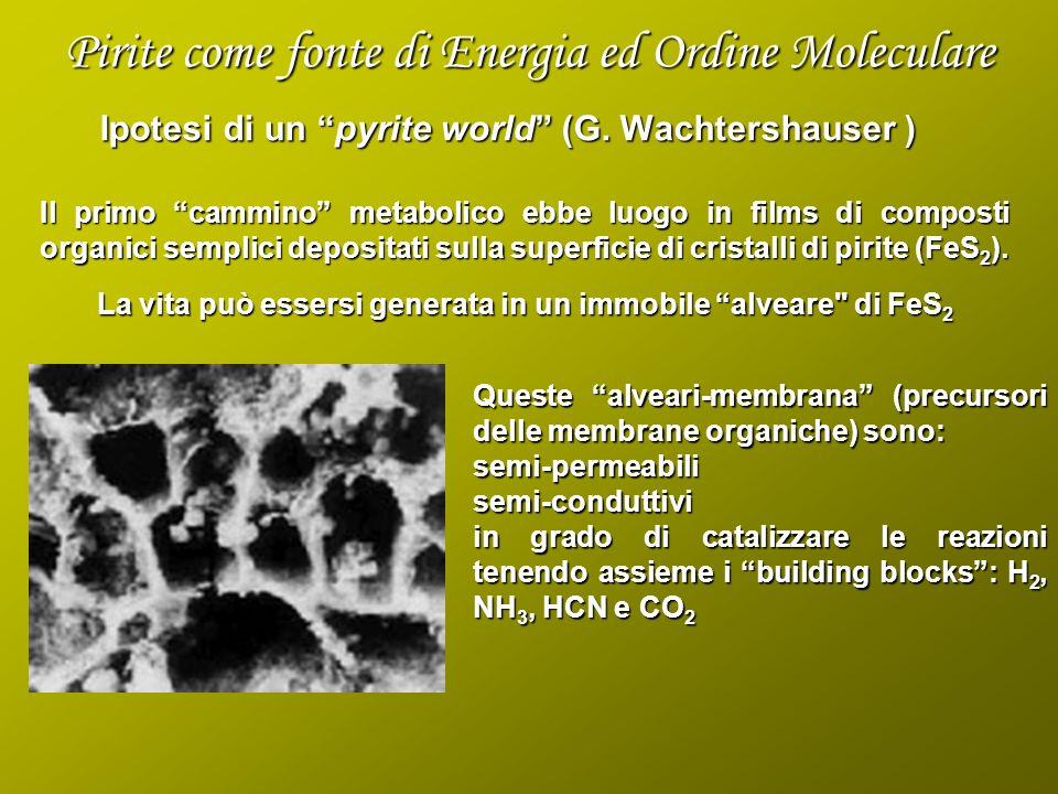 Ipotesi di un pyrite world (G. Wachtershauser ) Il primo cammino metabolico ebbe luogo in films di composti organici semplici depositati sulla superfi