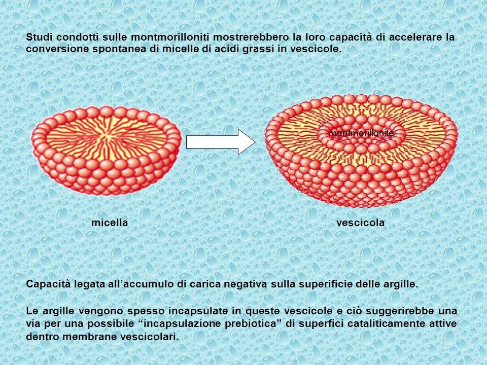 Studi condotti sulle montmorilloniti mostrerebbero la loro capacità di accelerare la conversione spontanea di micelle di acidi grassi in vescicole. Ca
