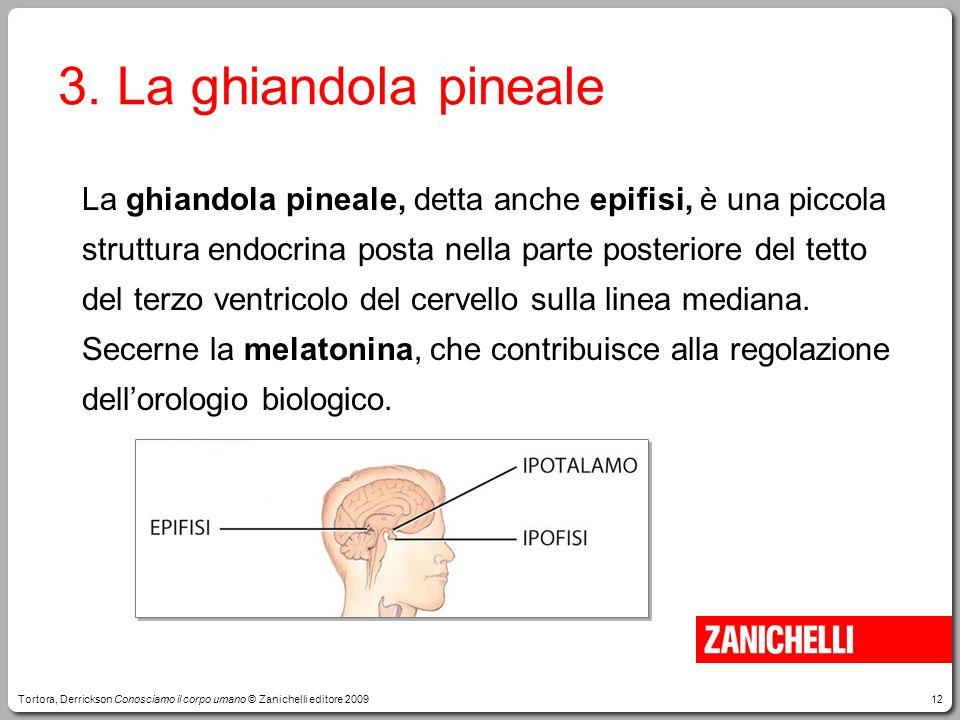 12 3. La ghiandola pineale La ghiandola pineale, detta anche epifisi, è una piccola struttura endocrina posta nella parte posteriore del tetto del ter