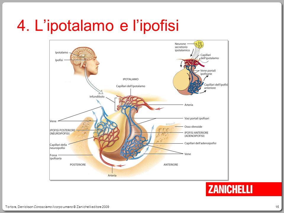 15 4. Lipotalamo e lipofisi Tortora, Derrickson Conosciamo il corpo umano © Zanichelli editore 2009