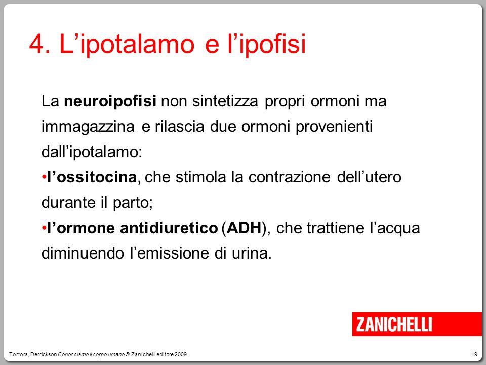 19 4. Lipotalamo e lipofisi La neuroipofisi non sintetizza propri ormoni ma immagazzina e rilascia due ormoni provenienti dallipotalamo: lossitocina,