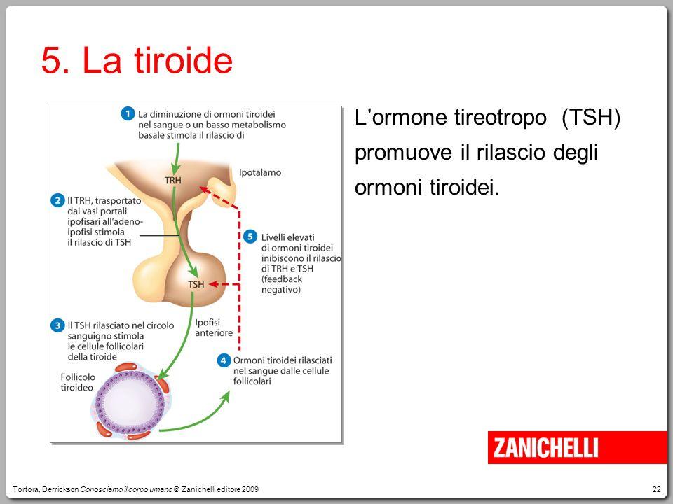 22 5. La tiroide Lormone tireotropo (TSH) promuove il rilascio degli ormoni tiroidei. Tortora, Derrickson Conosciamo il corpo umano © Zanichelli edito