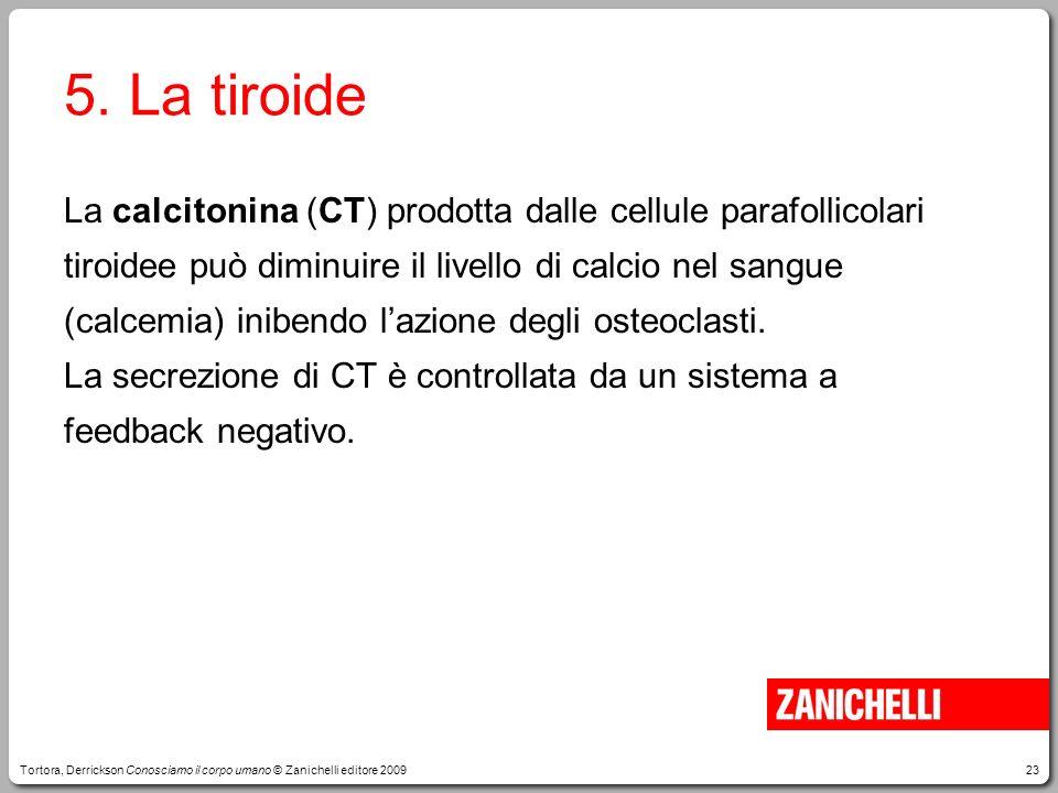 23 5. La tiroide La calcitonina (CT) prodotta dalle cellule parafollicolari tiroidee può diminuire il livello di calcio nel sangue (calcemia) inibendo