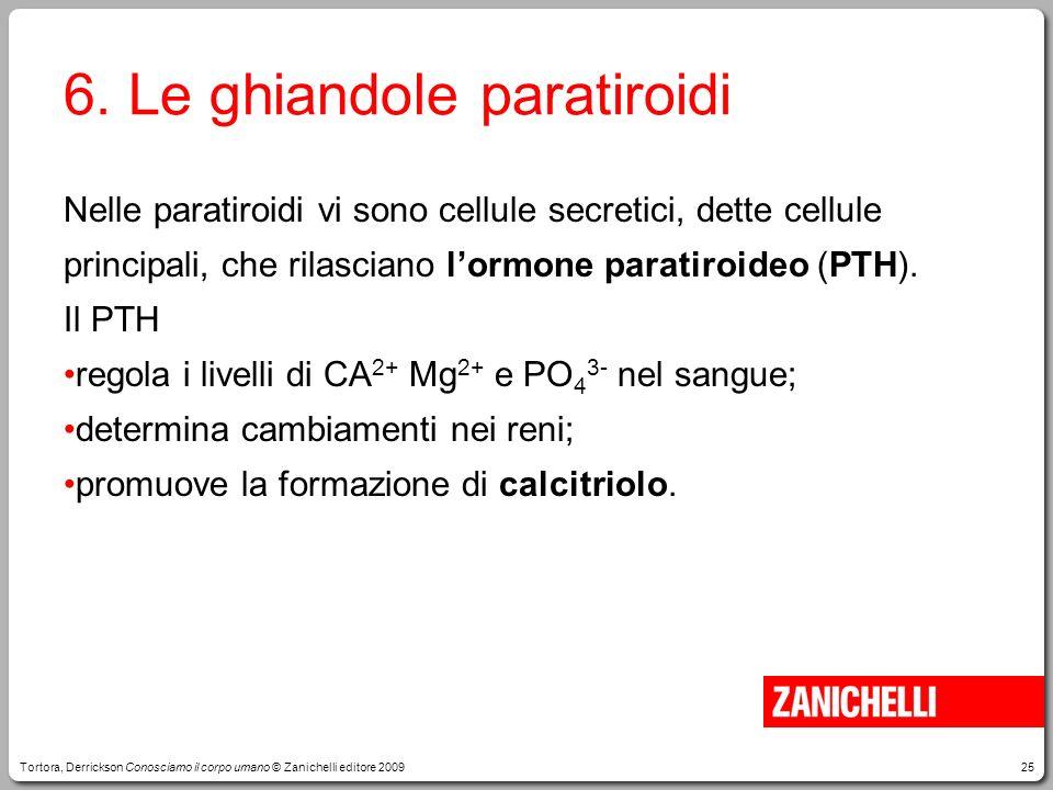25 6. Le ghiandole paratiroidi Nelle paratiroidi vi sono cellule secretici, dette cellule principali, che rilasciano lormone paratiroideo (PTH). Il PT