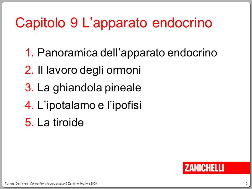 3 Capitolo 9 Lapparato endocrino 1.Panoramica dellapparato endocrino 2.Il lavoro degli ormoni 3.La ghiandola pineale 4.Lipotalamo e lipofisi 5.La tiro