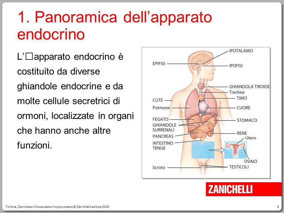 5 1. Panoramica dellapparato endocrino Lapparato endocrino è costituito da diverse ghiandole endocrine e da molte cellule secretrici di ormoni, locali